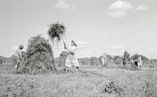 Heinätöiden tekoa vuonna 1964.