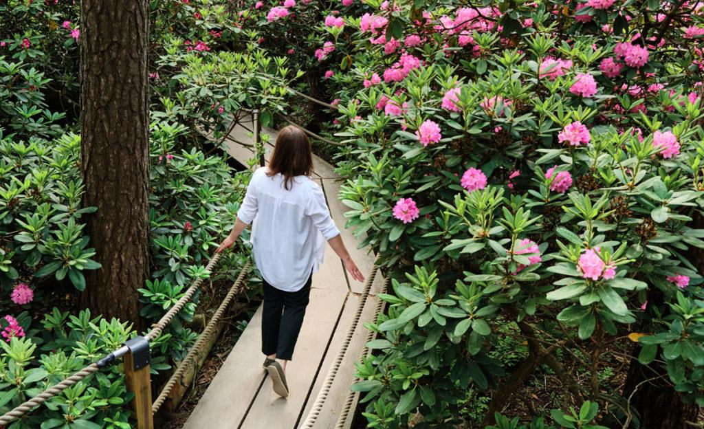 Nuori nainen kävelee vehereässä alppiruusupuistossa kapealla kävelysillalla. Naisesta näkyy selkä, takaraivo ja jalat.